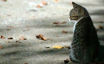 ای کاش گربه