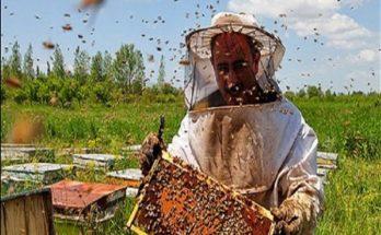 زنبور داری فقط با دو میلیون!