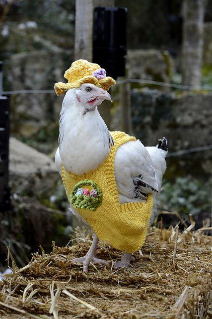 مرغ آرایی