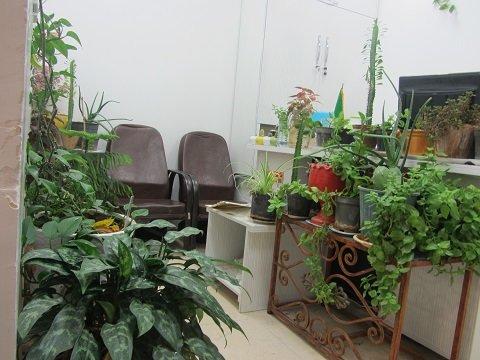 تزیین محیط کار با گل و گیاه