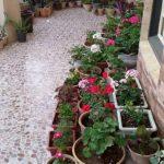 کارآفرینی بانوی یزدی در حیاط خانه