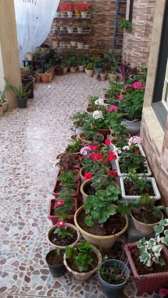 پرورش گل در حیاط